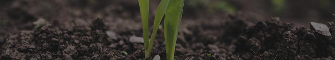 Fertilizantes Orgánicos<br></noscript></noscript>Sólidos y Fertirriego